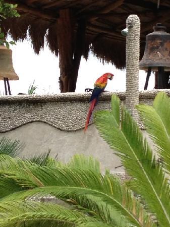Captain Dulche's Museum: birds next door