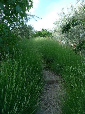Ventena Vecchia - Antico Frantoio: Im Garten unterwegs 2