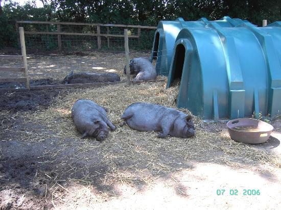 Hillside Animal Sanctuary: Frettenham