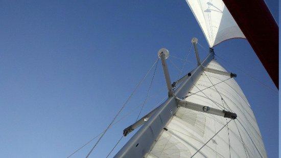 Nauti-Cat Cruises: Lying in the net, taking in the view!