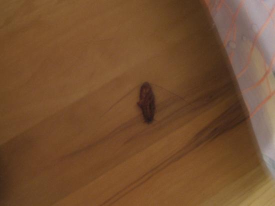 سي ميست: Mutant Roach 