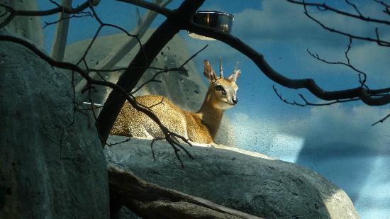 斯塔滕岛动物园