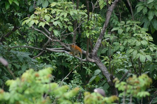 Tulemar Bungalows & Villas: Squirrel monkey