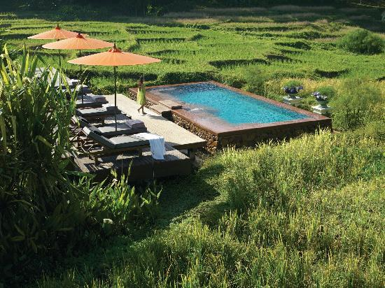 Four Seasons Resort Chiang Mai: Ricefield