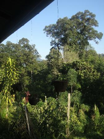 Kurakura Homestay: The jungle from the veranda