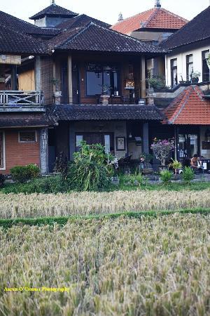 Kunang-Kunang Guesthouse: My room (top)