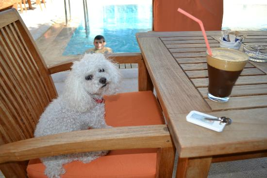 Thimaras Traditional Residences : my puppy having coffee