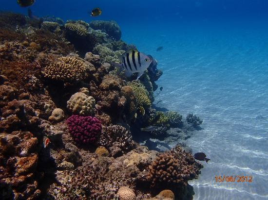 Sofitel Taba Heights : snorkeling on Sofitel beach