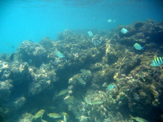 Dreams La Romana Resort & Spa: Beach Snorkeling 1