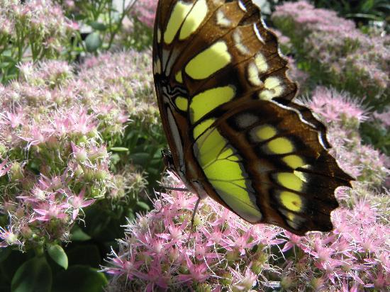 21 mooie kleurrijke vlinder - photo #45