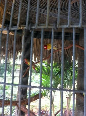 Universal Palms Hotel: parrots