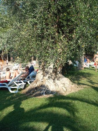 Ulivo in piscina foto di villaggio giardini d 39 oriente - Hotel villaggio giardini d oriente ...