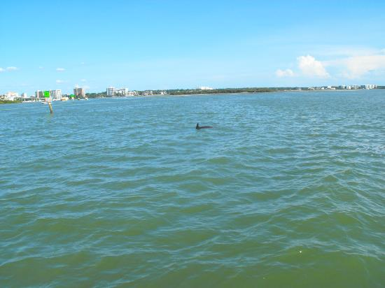 Dolphin Encounter: video of dolphin