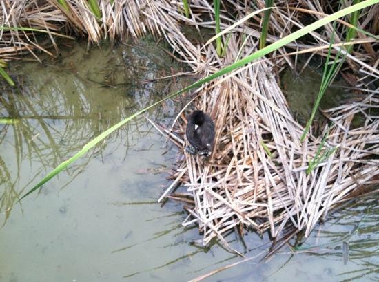 Leonabelle Turnbull Birding Center: In the grass.