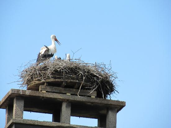 Hotel Restaurant Sonne : Storks across from us
