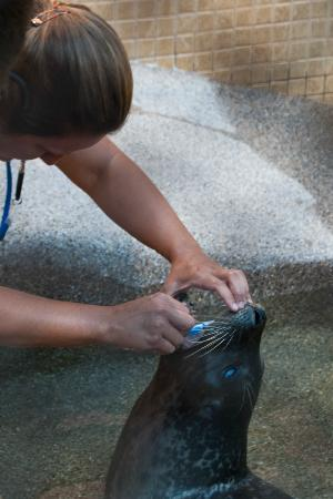 Woods Hole Aquarium: Bumper getting his teeth brushed