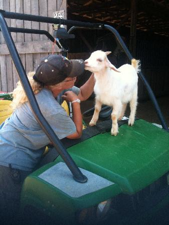 The Hidden Cave Ranch Bed & Breakfast: Moonshine the baby goat with Marion