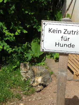 LVR-Freilichtmuseum Kommern: No Dogs!