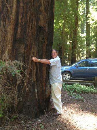 Richardson Grove State Park: Try to get your arms around one of these!