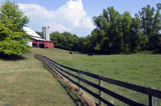 Goose Creek Farm Bed and Breakfast: Looking back from the main house to the barn and pasture