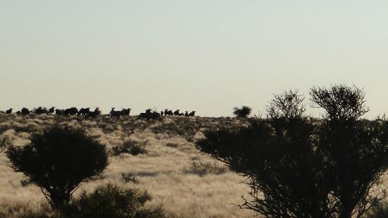 Kalahari Anib Lodge: Pirschfahrt ins Gelände der Lodge