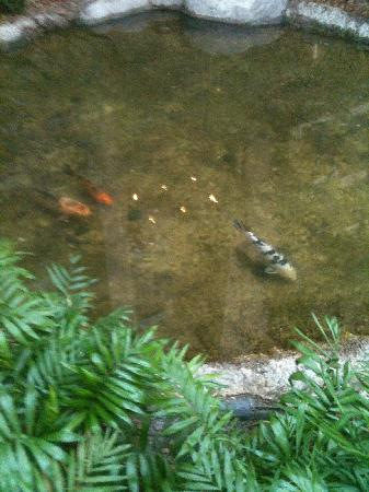 Embassy Suites by Hilton Dallas DFW Airport South: koi