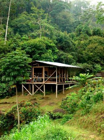 Rambala Jungle Lodge: The Lodge
