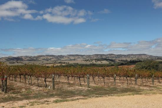 God's Hill Wines