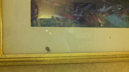 York, Pensilvania: Dead bugs found behind the glass on a picture in the room