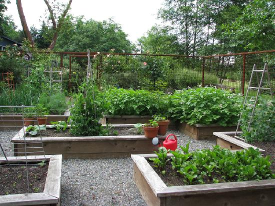 A&E Bed and Breakfast: Vegetable Garden