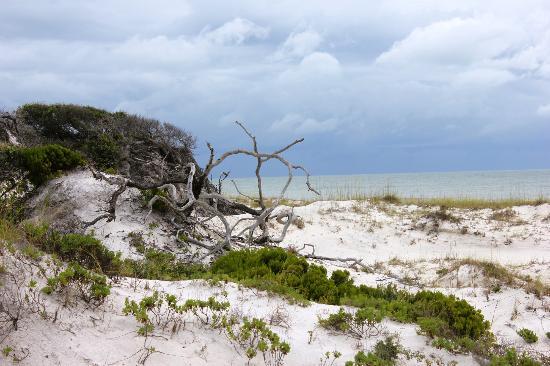 St. Joseph Peninsula State Park: Dunes