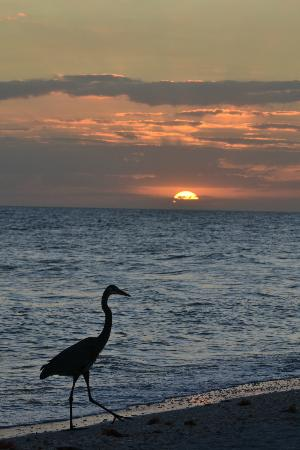 Sanibel Cottages Resort: Beach sunset