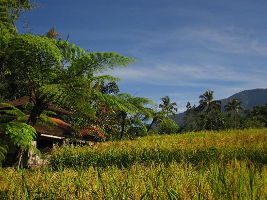 Prana Dewi Mountain Resort: view on the property