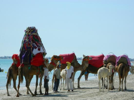 Djerba Mare: tipicità del luogo