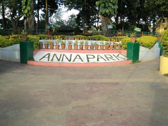 Anna Park