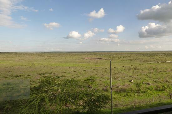 Ole Sereni: View from Room 322