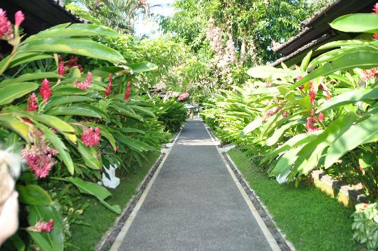 Candi Beach Resort & Spa: Main path to our room