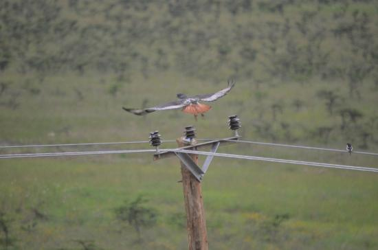 Ole Sereni: View from window - bird in flight