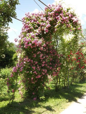 Villa Giardino: Bosco didattico, roseto
