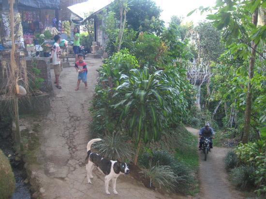 Karangsari Guest House: villagelife Munduk