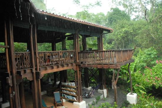 Playa Nicuesa Rainforest Lodge: Im Regenwald