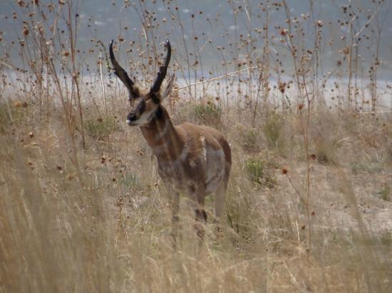 Antelope Island Camping Reviews