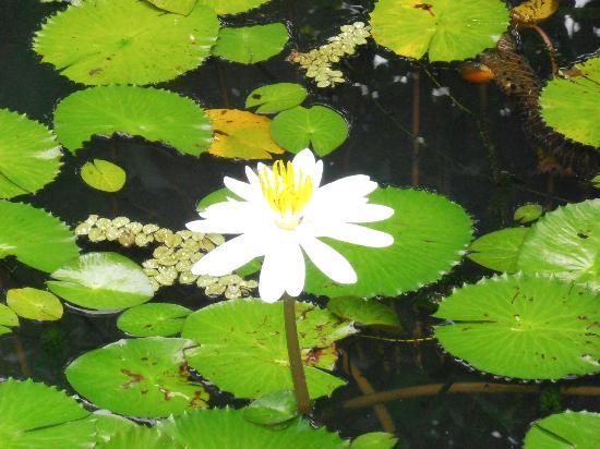 Alby Lodge: Jardines