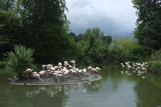Tierpark Dählhölzli: Flamingos beim Eingang
