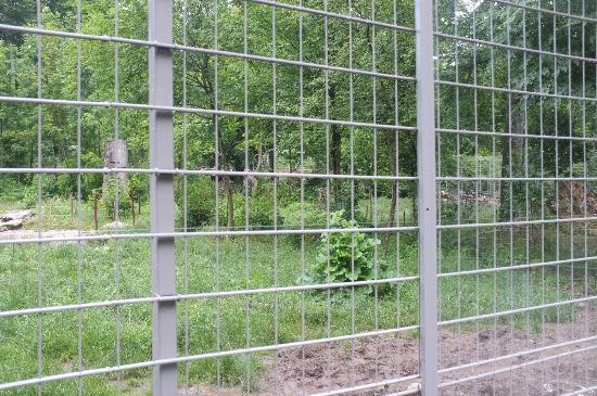 Tierpark Dählhölzli: Blick in den Bärenwald