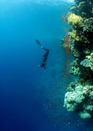 Blue Ocean Free Divers - Day Course Photo