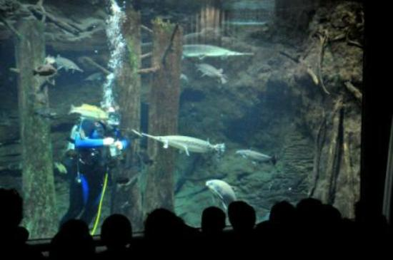 Underwater theater with diver speaking as he feeds different