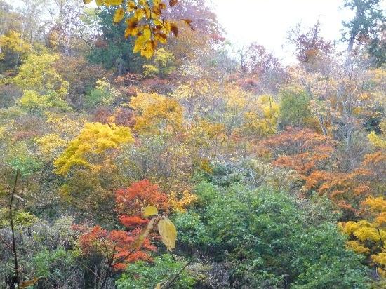 Amo Natural Park: 10月 錦色の森