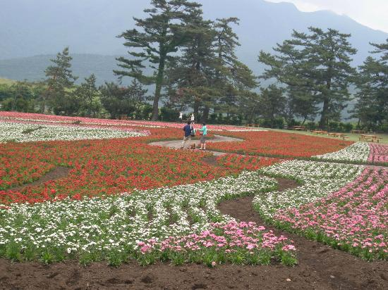 Taketa Japan  city pictures gallery : ... 綺麗でした Picture of Kuju Flower Park, Taketa TripAdvisor