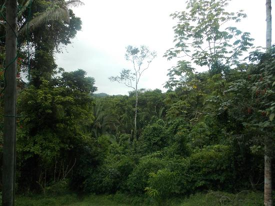 Pook's Hill Lodge: Surrounding Jungle